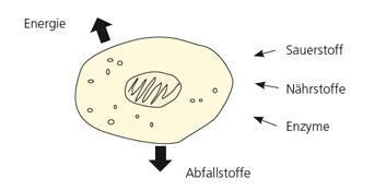 Funktion der Zelle